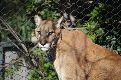 SD Zoo 2019-03-05