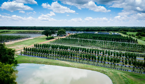 7-15-2019 Purtis Creek Farms Plants