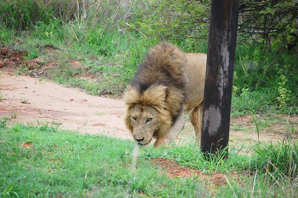 Kruger - Day 22 - Nov 3