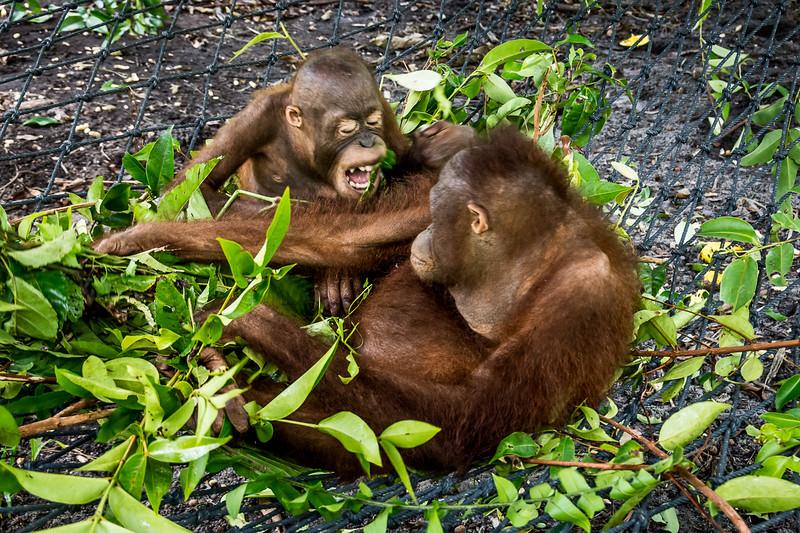 Borneo-2257.jpg