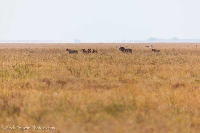 South_Serengeti-30.jpg