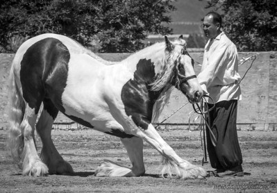 Petaluma Equestrian Art Festival
