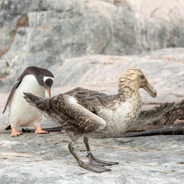 2019_01_Antarktis_04599.jpg