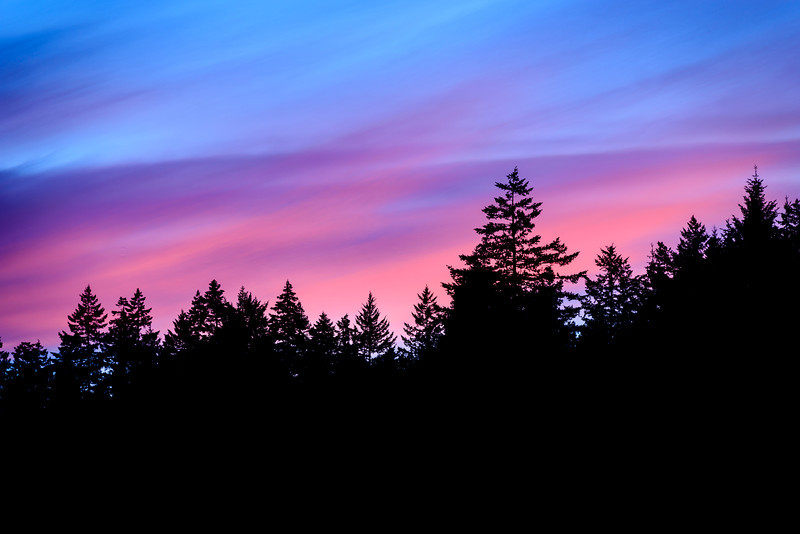 Pink Sunset and Silhouette