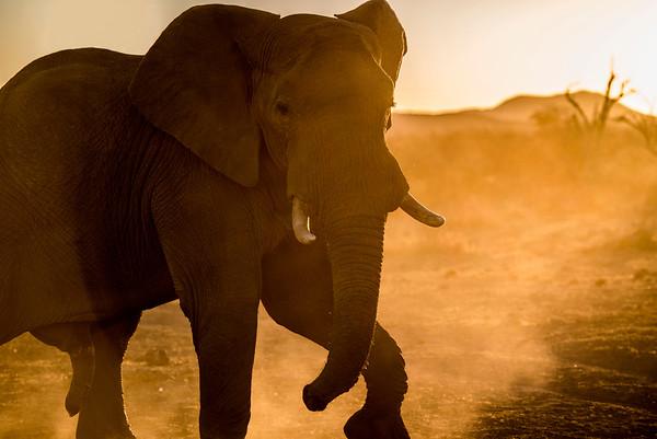 SepOct2014 - South Africa, Madikwe Game Reserve, Impodimo Lodge