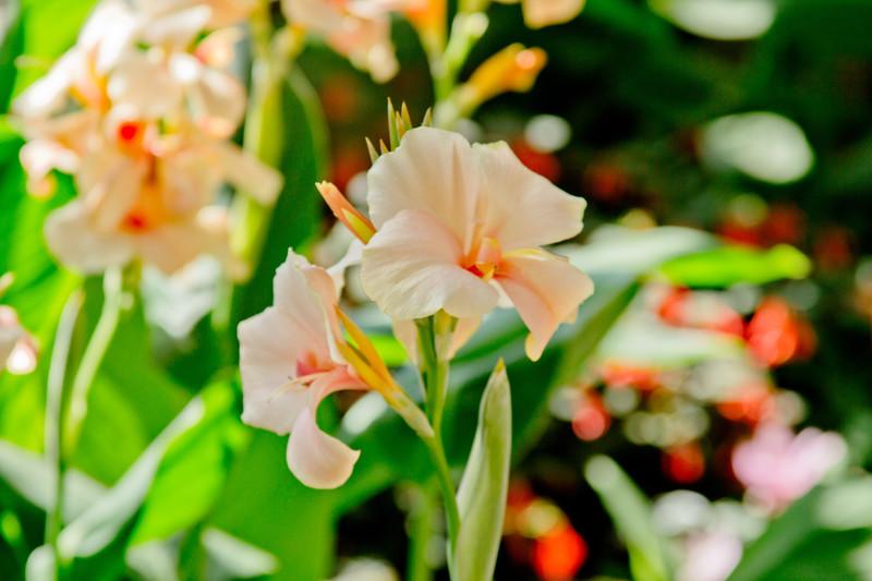 Warm White Flower