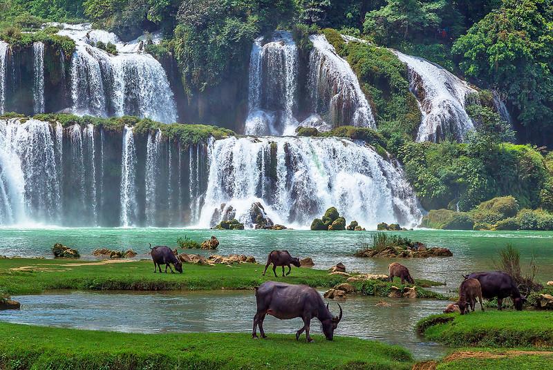 Ban Gioc Waterfall Herd IMG_7356.jpg