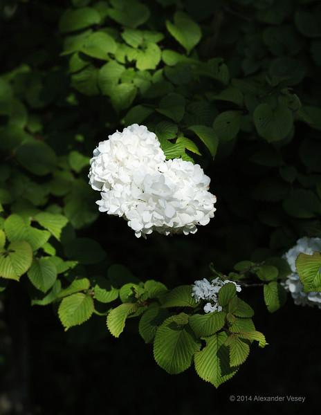 Kamakura _1189.jpg