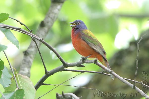Birding 2019 June