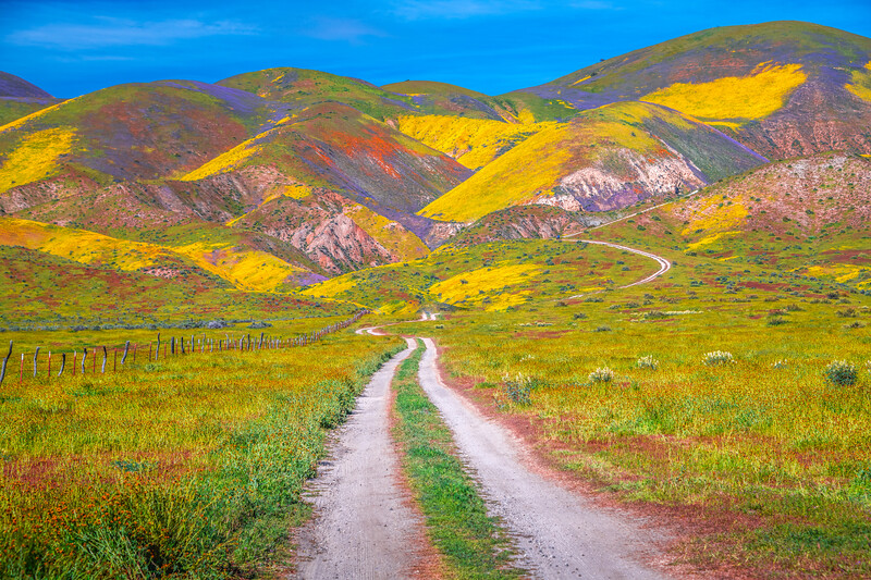 Carrizo Plain National Monument Wildflowers Superbloom Spring Symphony 28!  Elliot McGucken Fine Art Landscape Nature Photography Prints & Luxury Wall Art