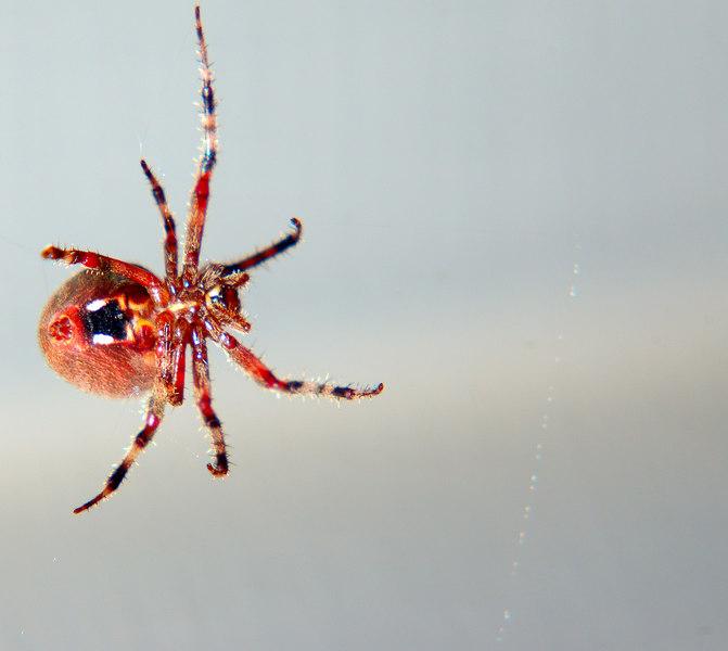 spider08.jpg