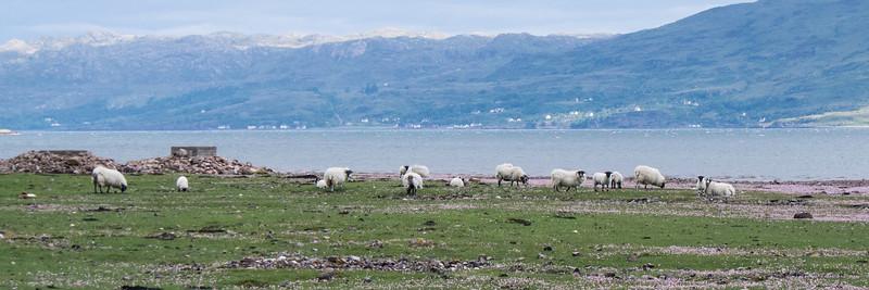 The Inn raised Highland cows and sheep.