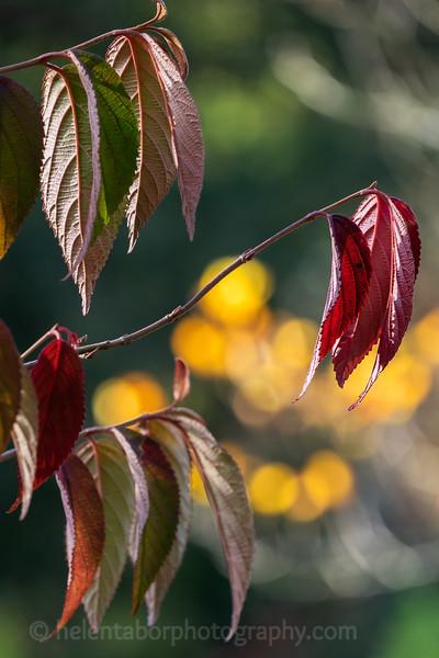 Himalayan Garden Oct 18-56.jpg