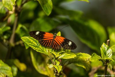 Butterflies &Moths - Incorrect Camera Settings