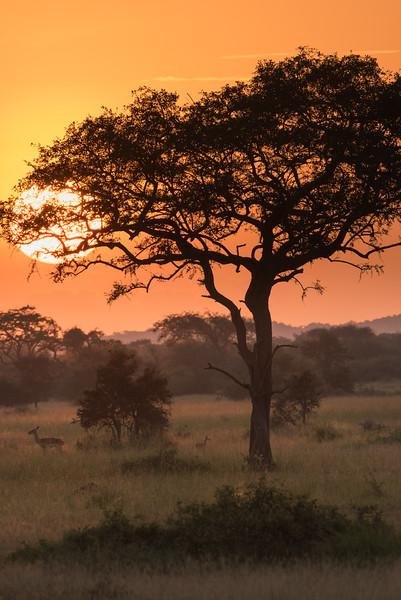 20160213_0212_Serengeti_Day_5.jpg
