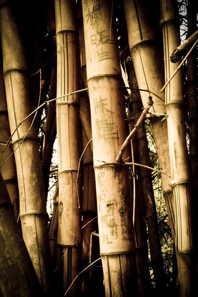 fonsecafoto-china-221.jpg
