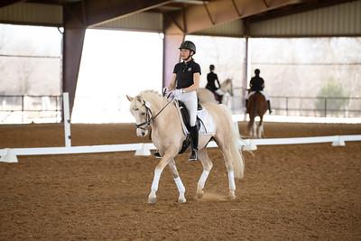 Horse 165
