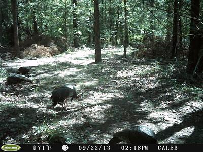 Caleb's Deer Cam