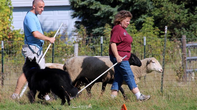 2015.9.27 Herding at Bonnies (58).JPG