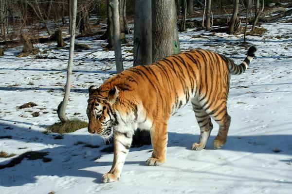 2007 - Bronx Zoo