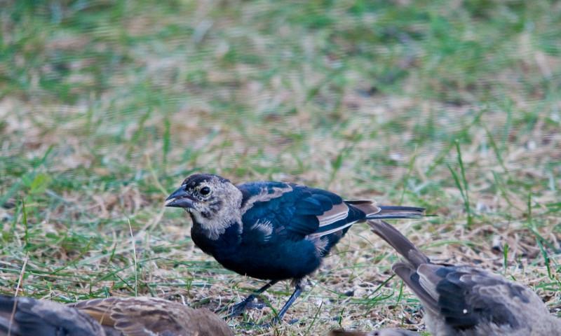 Backyard Birds-Aug-2008