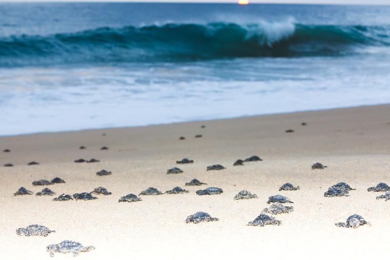 Sea Turtle release Cabo