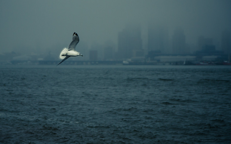 Hudson Gull-7877.jpg