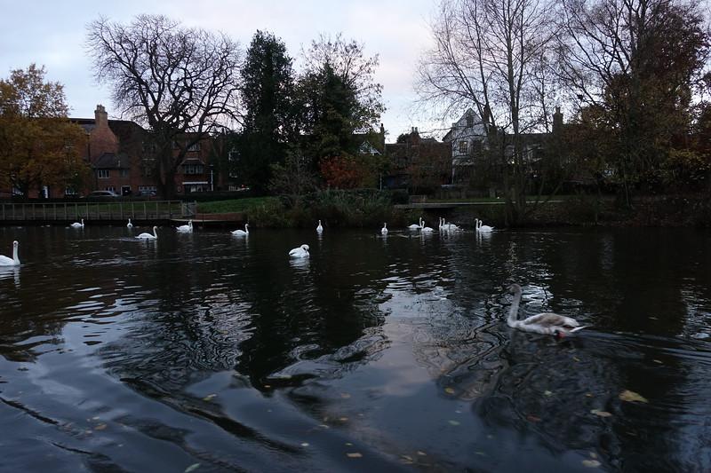 River Avon_Stratford Upon Avon_England_GJP03391.jpg