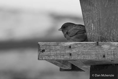 01-04-2014-birds