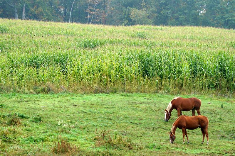 10-10-2012 Foliage 095 SM Edit.jpg
