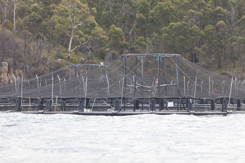 Tasmania_2015_029.jpg