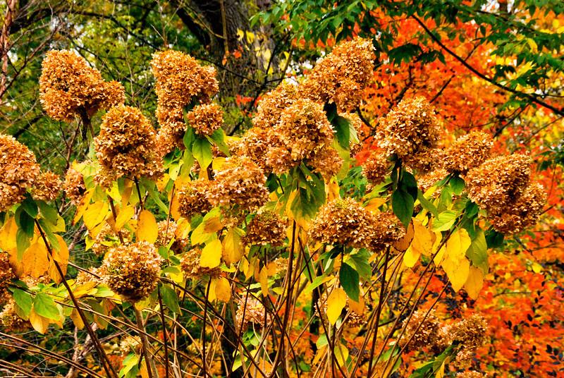 Arboretum October 2013 brown tops.jpg