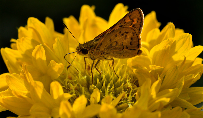 Flower-and-butterfly-hampit.jpg