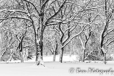 ArborOaks Winter