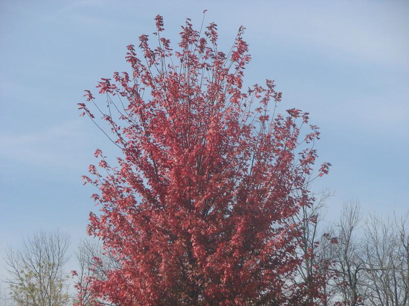 Fall pics 2008 030.jpg