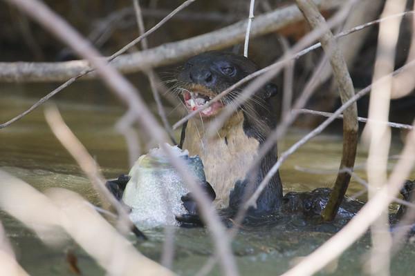 Abby otter fish hook