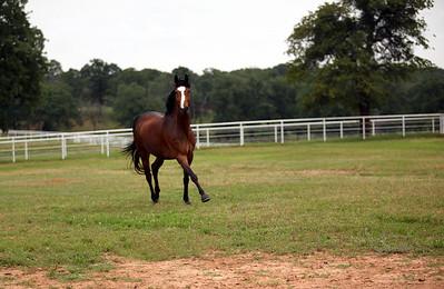 Clare Morrow Sport Horses