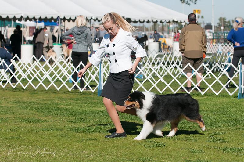 20170205_Australian Shepherds_Lost Dutchman Kennel Club-19.jpg