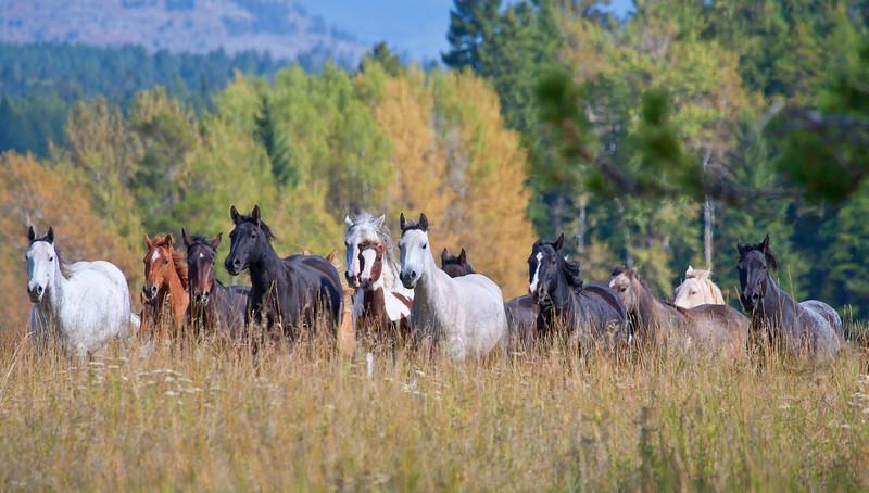 horse pano.jpg