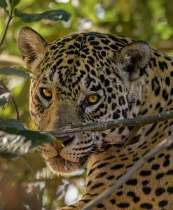 Brazil - Pantanal - 2017
