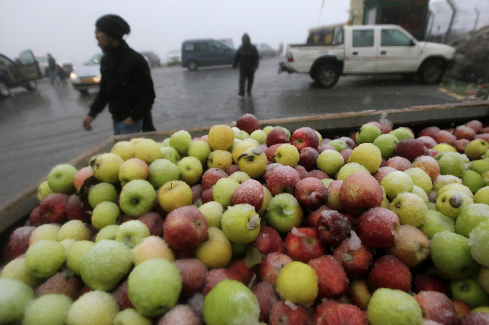 Description of . A crate of apples is seen on a pick-up truck as snow falls near the Druze village of Majdal Shams on the Golan Heights January 8, 2013. REUTERS/Ammar Awad