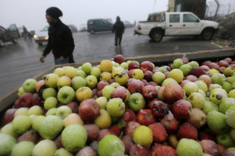 . A crate of apples is seen on a pick-up truck as snow falls near the Druze village of Majdal Shams on the Golan Heights January 8, 2013. REUTERS/Ammar Awad