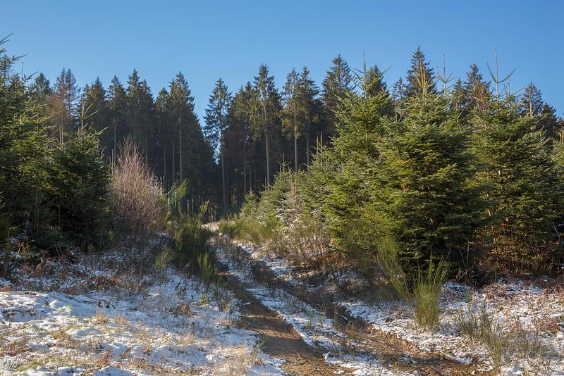 Bois de conifères près de Carlsbourg