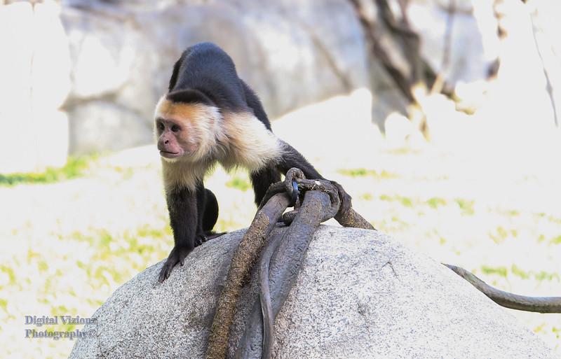 2016-07-17 Fort Wayne Zoo 018LR.jpg