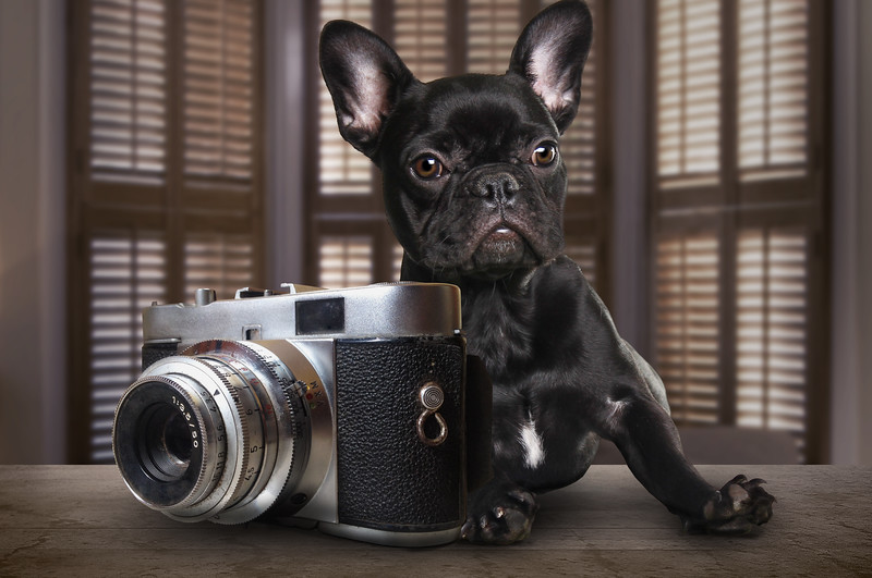 black-puppy-3.jpg