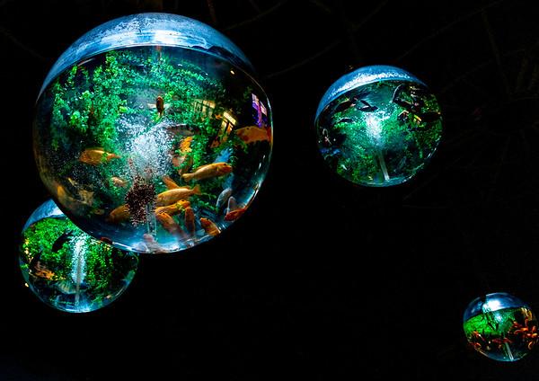 Odysea Aquarium 3 October 2020