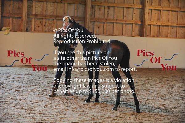 Hyperion Farm Holsteiner Inspection Sept 2013