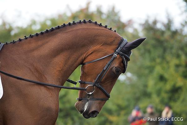 Ballindenisk Horse Trials - 21/09/2018