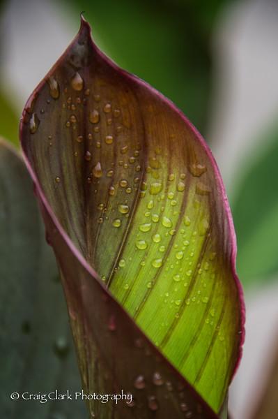 Schreiners Iris Garden 2015 II