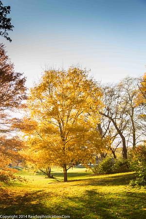 Morton Botanical Gardens